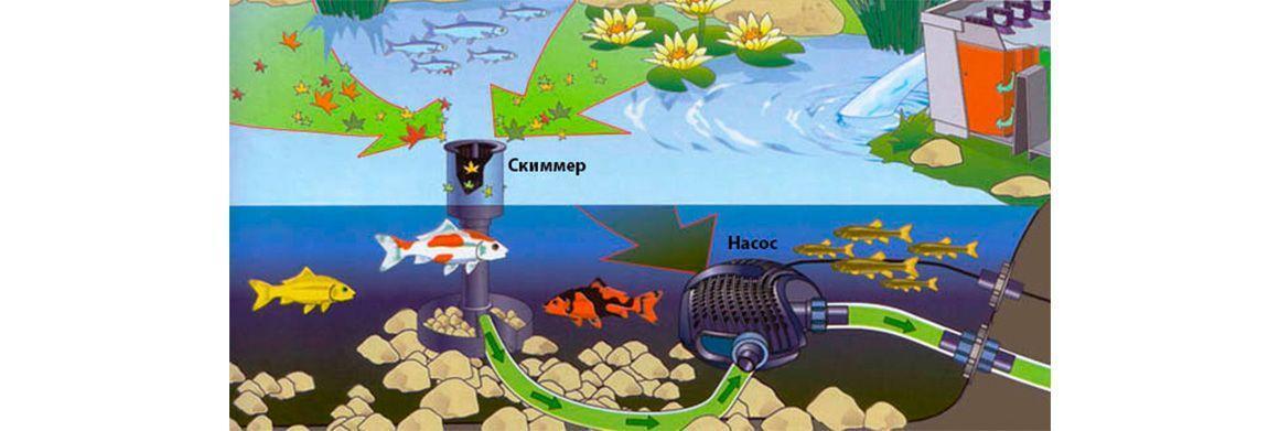 Принцип работы скиммера для пруда